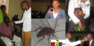 South Africa: Pastor Feeds Congregation With Cockroach And Poisonous Flower