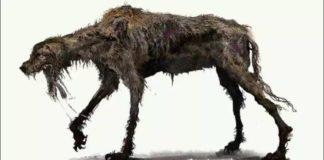 Rabies dog eats 5 children at Keta in Volta Region