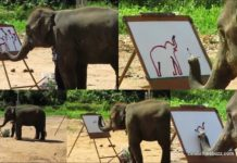 Suda: Meet the elephant that paints pictures using its trunk