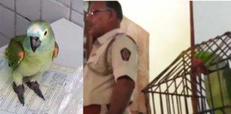 Parrot arrested by police for tipping off drug dealers