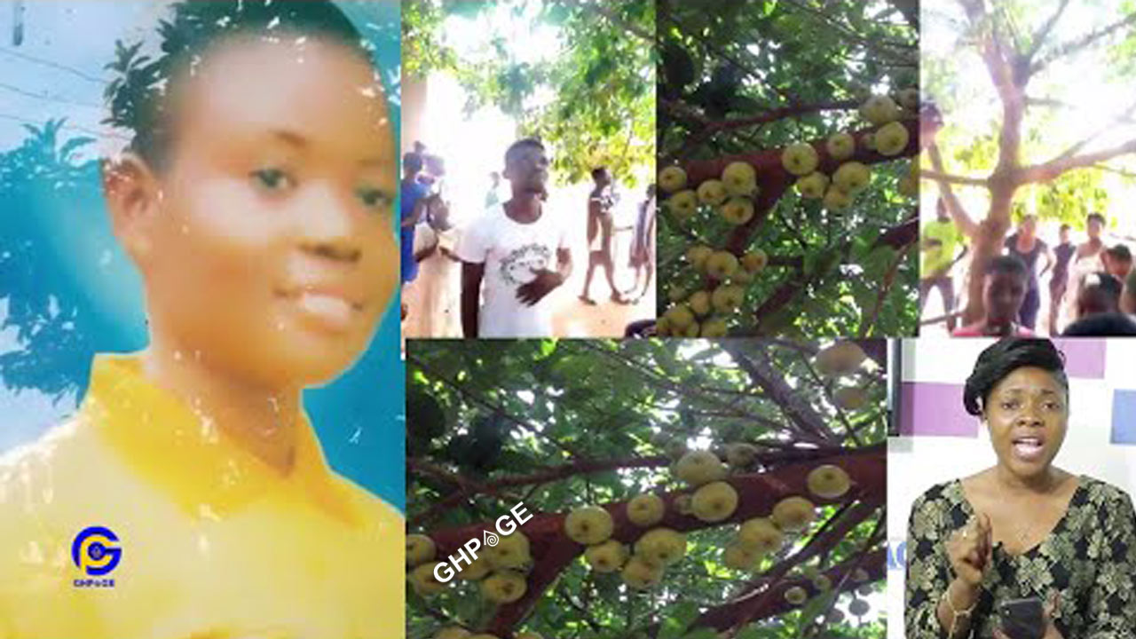 24-year-old girl makes history- grows the first apple tree in Ghana