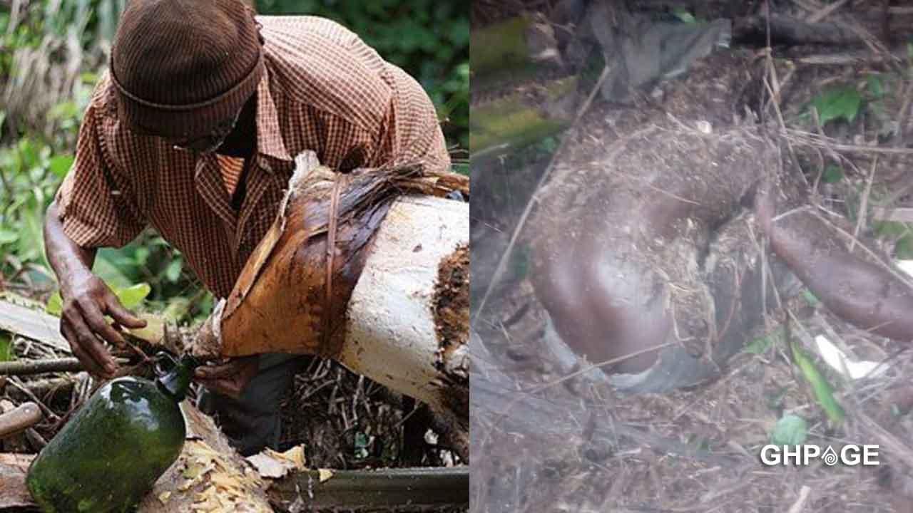 Palm wine tapper dead